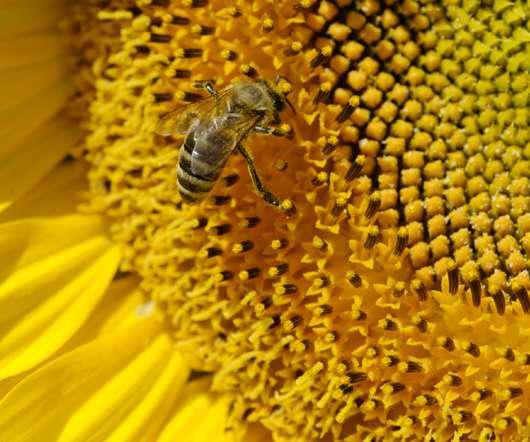 Bee good – gewinne eine Weleda Bienenpatenschaft!