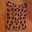 Rival de Loop Young Nail Sticker Black